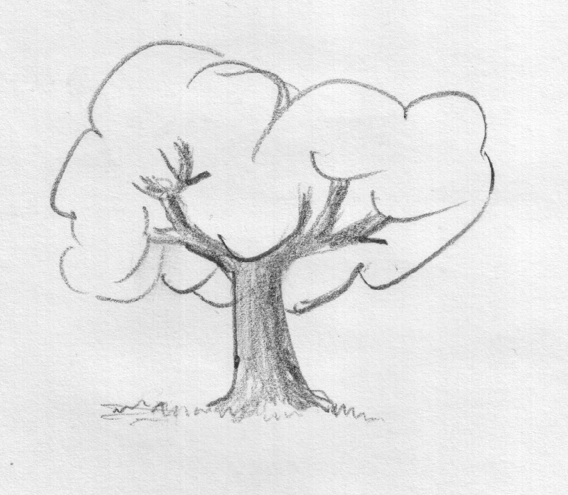 tree drawings pencil  Tree Pencil Drawing